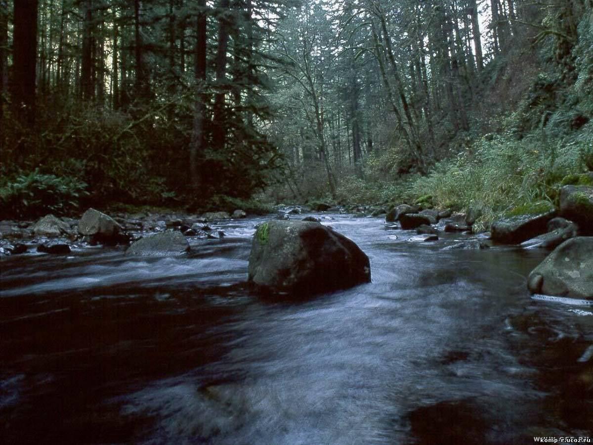 Аватарка Камень в лесной речке Категории природа Размеры 98x98 px